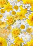 Коллаж белых и желтых цветков Стоковые Изображения