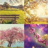Коллаж весны Стоковое Изображение