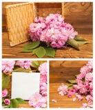 Коллаж вишневых цветов фото Стоковое Фото
