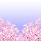 Коллаж гиацинта цветов розового Стоковое Фото