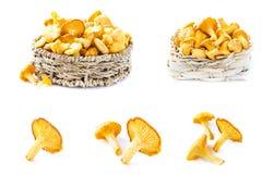 Коллаж гриба лисички на белом backgtound Стоковое Изображение