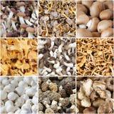 Коллаж гриба Стоковая Фотография RF