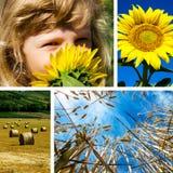 Коллаж девушки и солнцецвета Стоковые Изображения RF