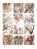Коллаж дерева рябины и ashberries стилизованных Стоковые Изображения