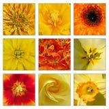 Коллаж желтых и оранжевых цветков стоковое изображение rf