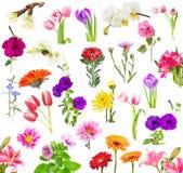 Коллаж зацветая цветков Стоковое Фото