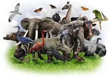 Коллаж животных Стоковые Изображения