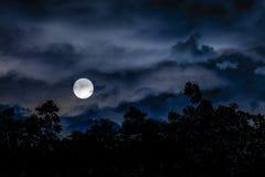 Коллаж иллюстрации сцены Moonscape темный иллюстрация штока