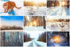 Коллаж, комплект по мере того как предпосылка может зима иллюстрации используемая темой Стоковые Фото