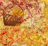 Коллаж осени с китайским crabapple Стоковые Изображения