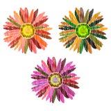 Коллаж при красочные изолированные цветки стоковое изображение rf
