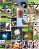 Коллаж птиц Стоковая Фотография