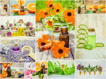 Коллаж трав и эфирного масла Стоковые Фото