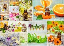 Коллаж трав и эфирного масла Стоковые Фотографии RF