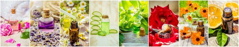 Коллаж трав и эфирного масла Стоковое фото RF