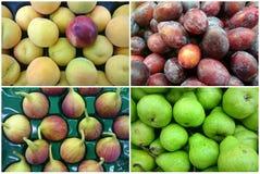 Коллаж фото свежих фруктов стоковая фотография
