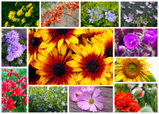 Коллаж цветка Стоковое Фото