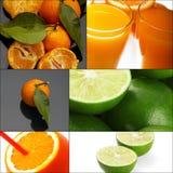 Коллаж цитрусовых фруктов Стоковое Изображение