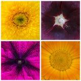 Коллаж частей 4 цветков, макрос, крупный план Стоковое фото RF