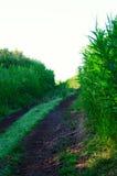 2 колейности грязи в высокорослой траве Стоковое Изображение