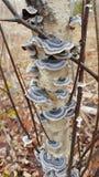 Коллектив гриба Стоковое фото RF