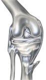 Колено - косточки, лигаменты & мышцы иллюстрация штока