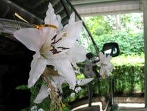 Колеса автомобиля украшенного с цветками для wedding Стоковые Фото