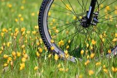 Колесо велосипеда на луге цветка Стоковая Фотография RF