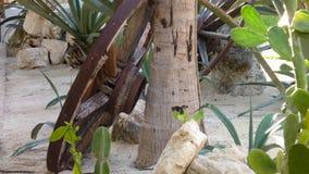 Колесо телеги деревом Стоковое Изображение