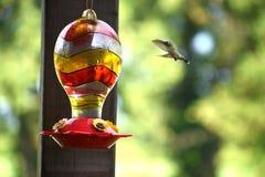 Колибри летания Стоковые Фото