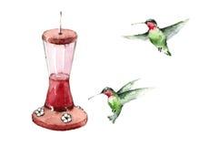 Колибри летая вокруг иллюстрации птицы акварели фидера вручают вычерченное Стоковые Изображения