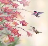 Колибри и красные цветки Стоковое Изображение