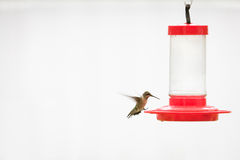 Колибри на фидере Стоковое Изображение RF