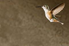 Колибри обширн-замкнутый женщиной Стоковая Фотография