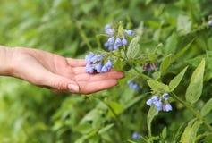 Колокол цветка женской руки касающий Стоковое Изображение RF