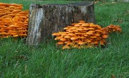 Колонии гриба Стоковые Фотографии RF