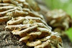 Колония гриба на дереве Стоковое Изображение