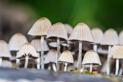 Колония гриба Стоковое Изображение RF