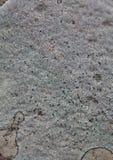 Колония лишайника на утесе Стоковые Фото