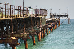 Колония морских птиц Стоковые Фотографии RF
