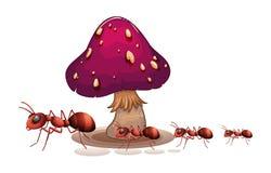 Колония муравьев около гриба Стоковые Фото