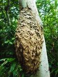 Колония муравья стоковые изображения