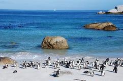 Колония пингвина на пляже океана около Кейптауна Стоковые Изображения