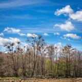 Колония цапли Стоковая Фотография