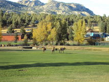 Колорадо осенью стоковое фото rf