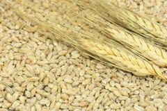 3 колоска пшеницы лежа в зерне помогают, волокно, хлопья Стоковые Изображения