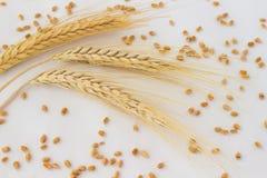 3 колоска пшеницы и зерна на белой предпосылке Стоковые Фотографии RF