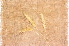 3 колоска пшеницы на дерюге Стоковая Фотография