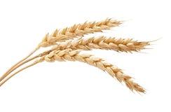 3 колоска пшеницы Стоковое Изображение