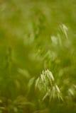 Колоски в траве стоковые фото